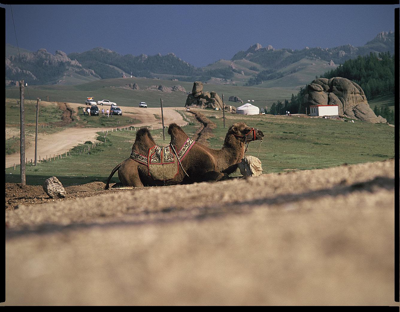MediumFormatPatrikWallner_Mongolia_CamelLOWQ-1