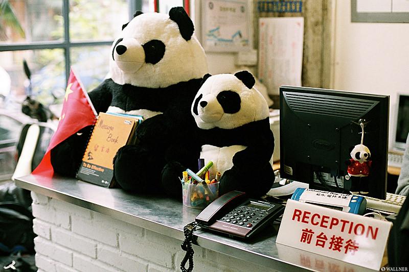 35mmPatrikWallner_Chengdu_PandasEverywhereLOWQ