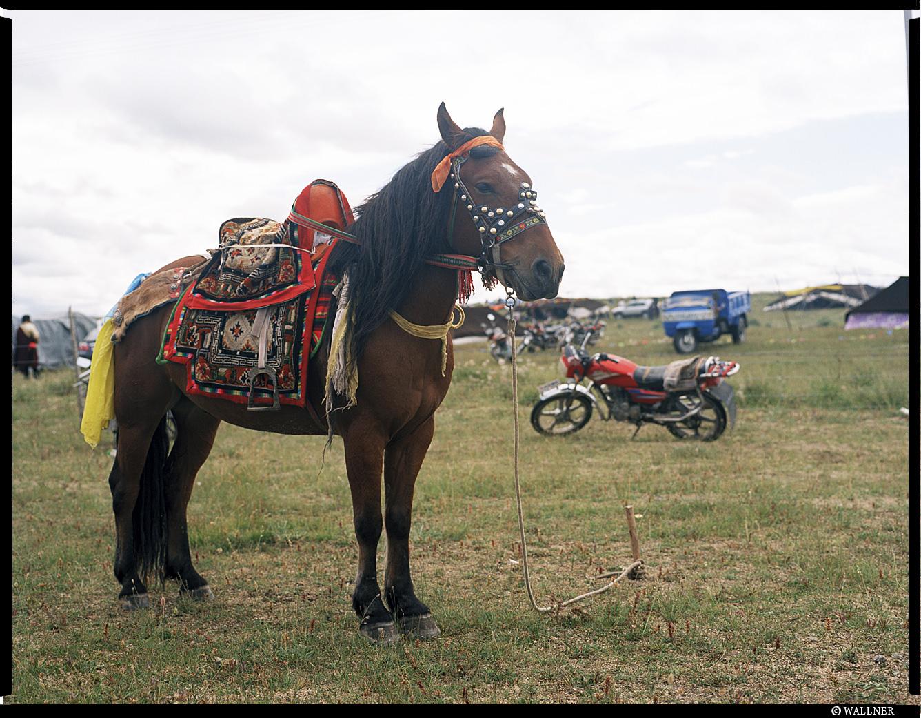 MediumFormatPatrikWallner_Qinghai_BoredTibetanHorseLOWQ