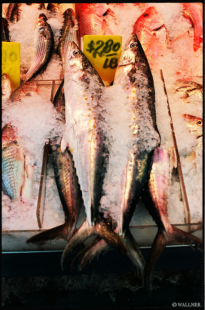 35mmPatrikWallner_NewYork_FishyFishLOWQ