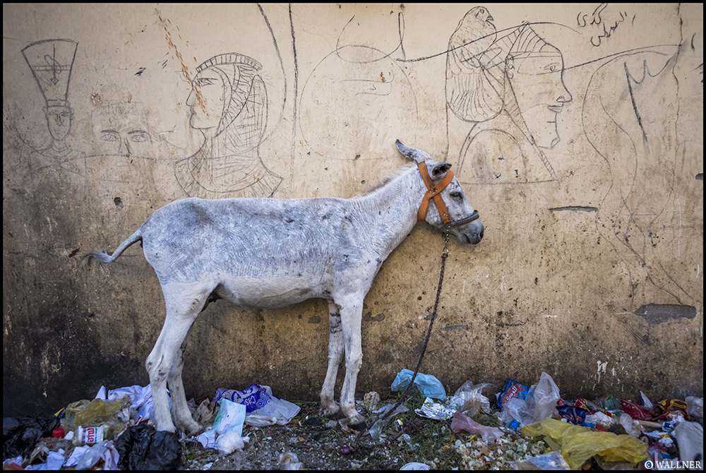 Digital Patrik Wallner Luxor Donkey LOWQ 1000P
