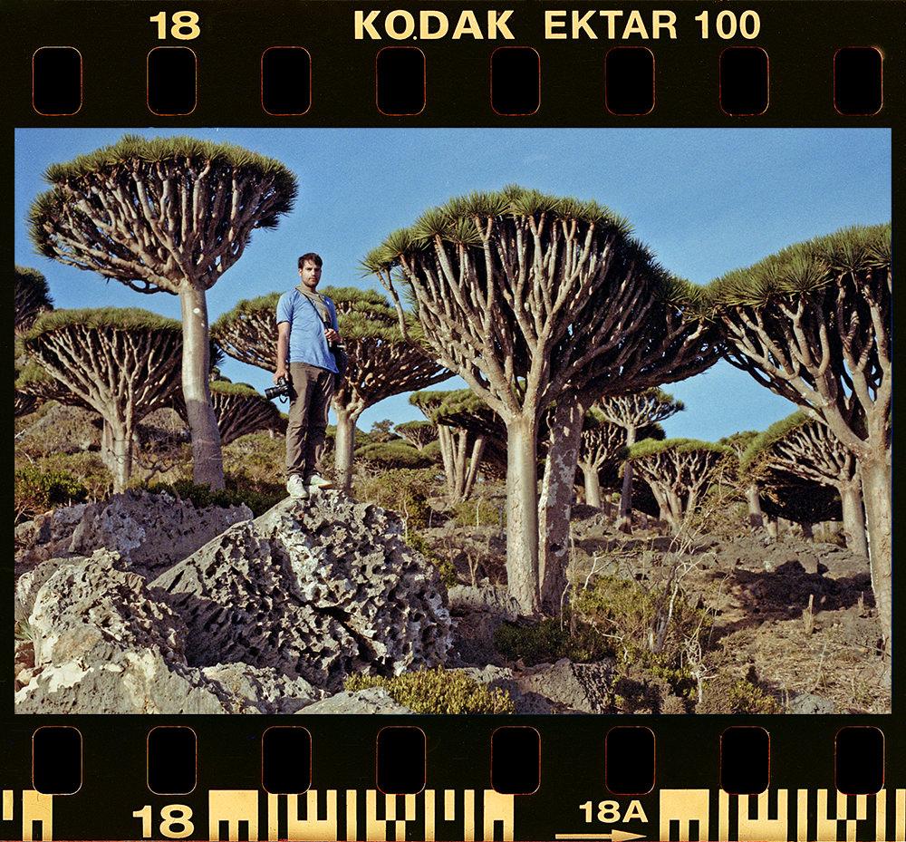 Patrik Socotra Trees 1000P