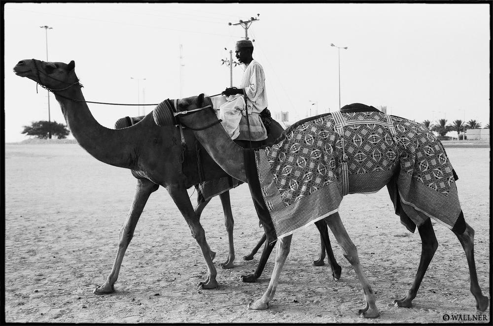 35mmPatrikWallner_Doha_CamelMarathonLOWQ1000P