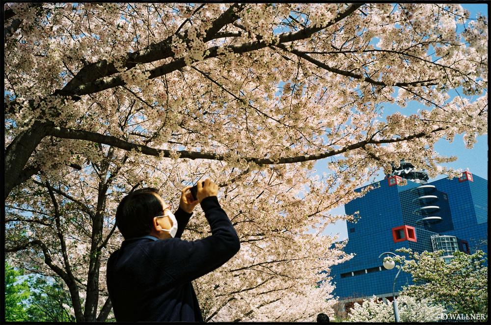 35mmPatrikWallner_Osaka_SakuraPhotoLOWQ1000P