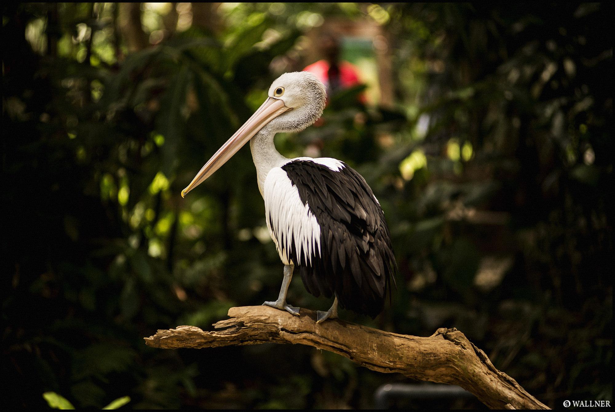 Digital Patrik Wallner Bali Pelican LOWQ 2000P w WM