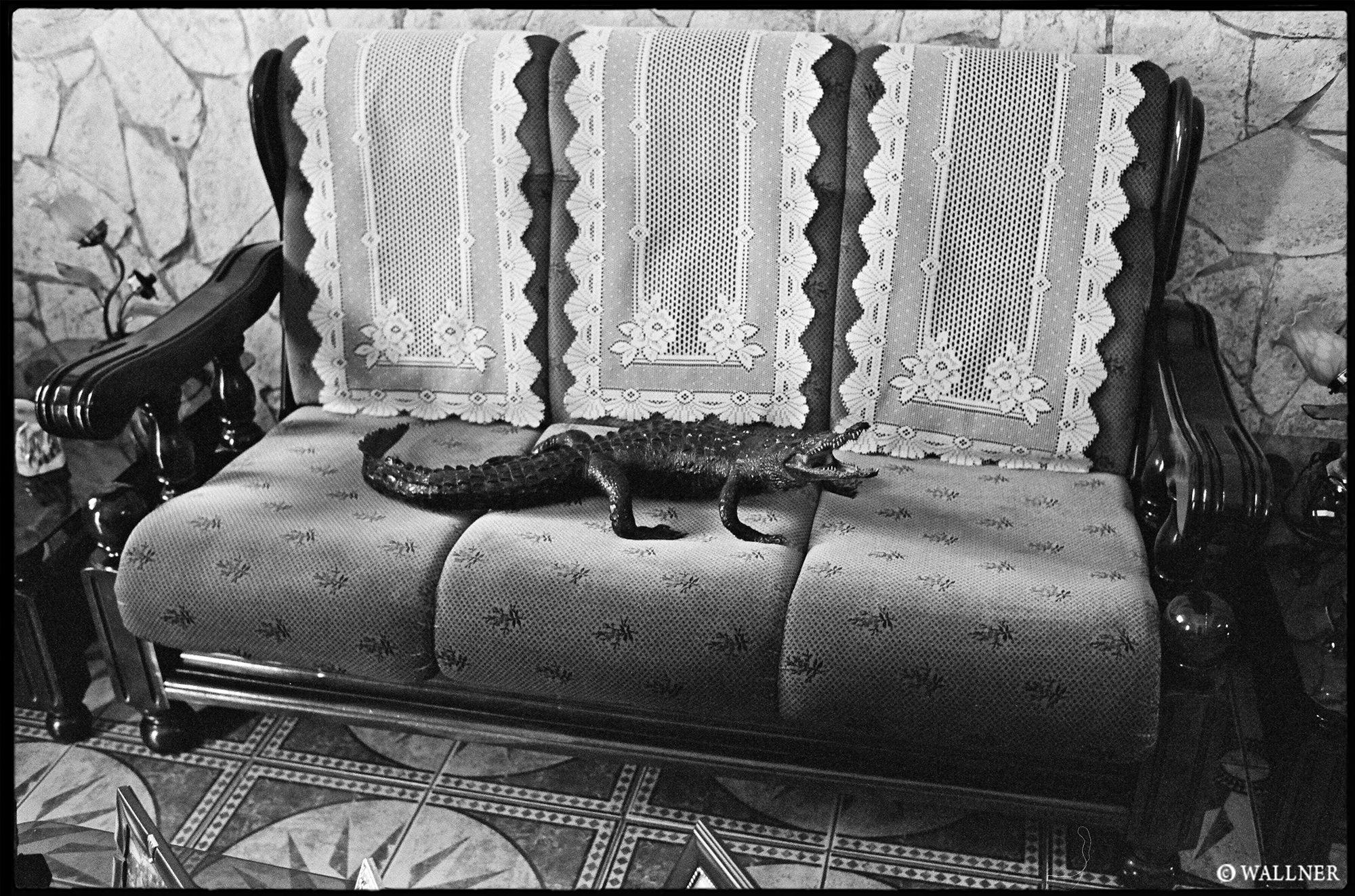 35mmPatrikWallner_Camaguey_Crocodile LOWQ 2000P w WM