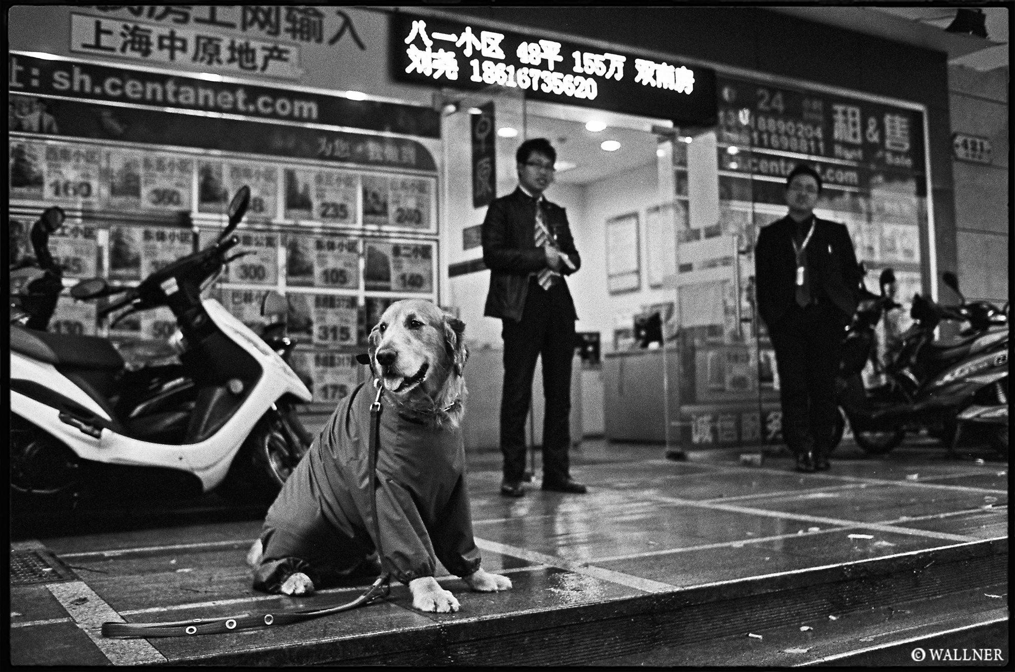 35mmPatrikWallner_Shanghai_DoggyCoat LOWQ 2000P