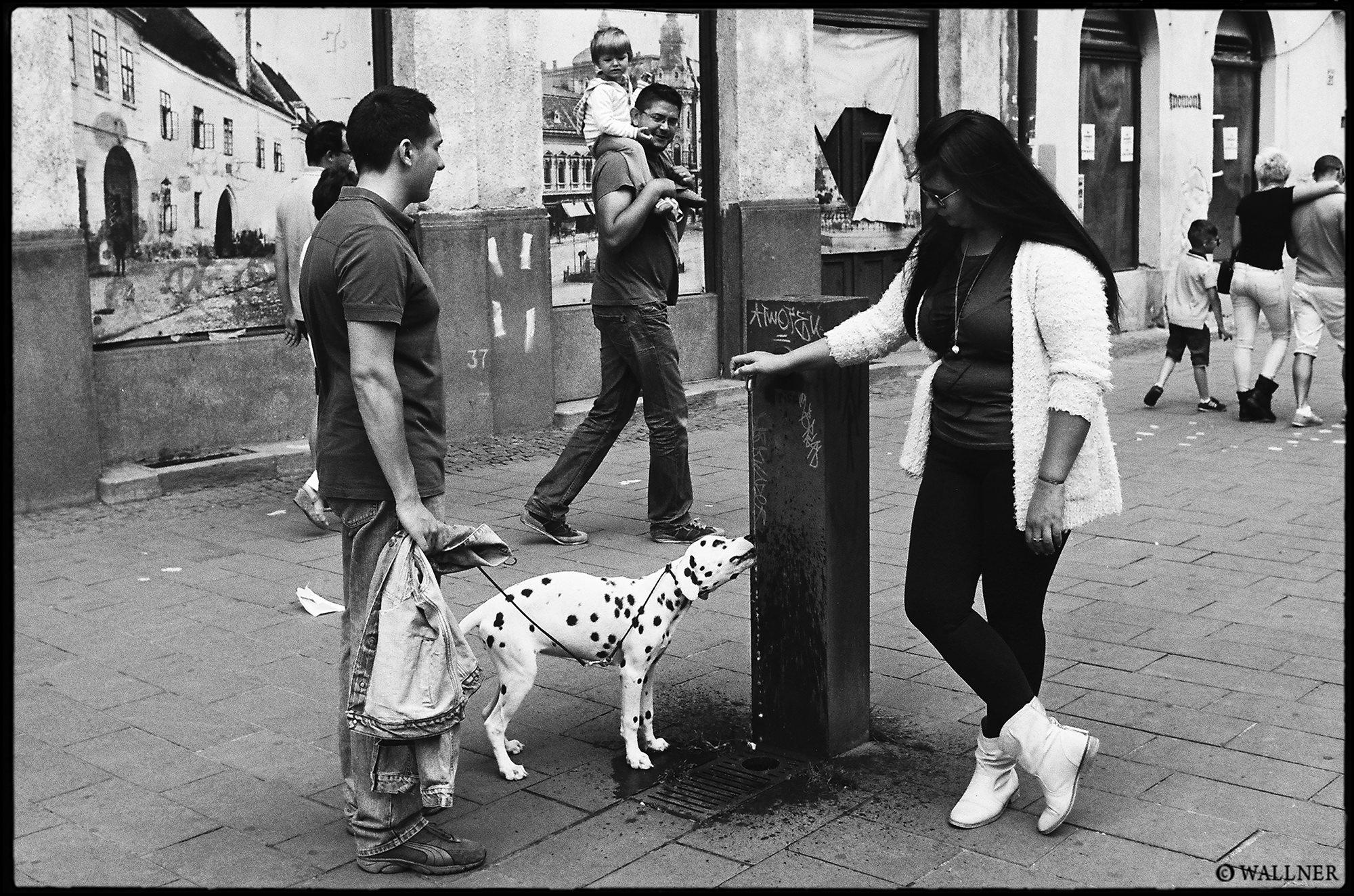 35mmPatrikWallner_Cluj_DogDrinkingLOWQ2000P