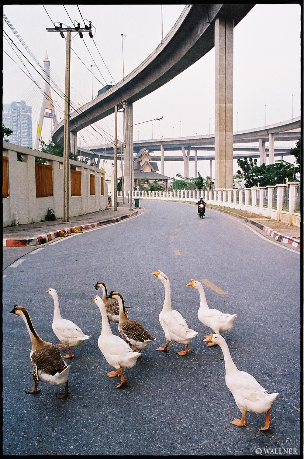 35mmPatrikWallner_Bangkok_DucksLOWQ