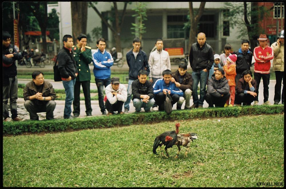 35mmPatrikWallner_Hanoi_CockFightLOWQ1000P