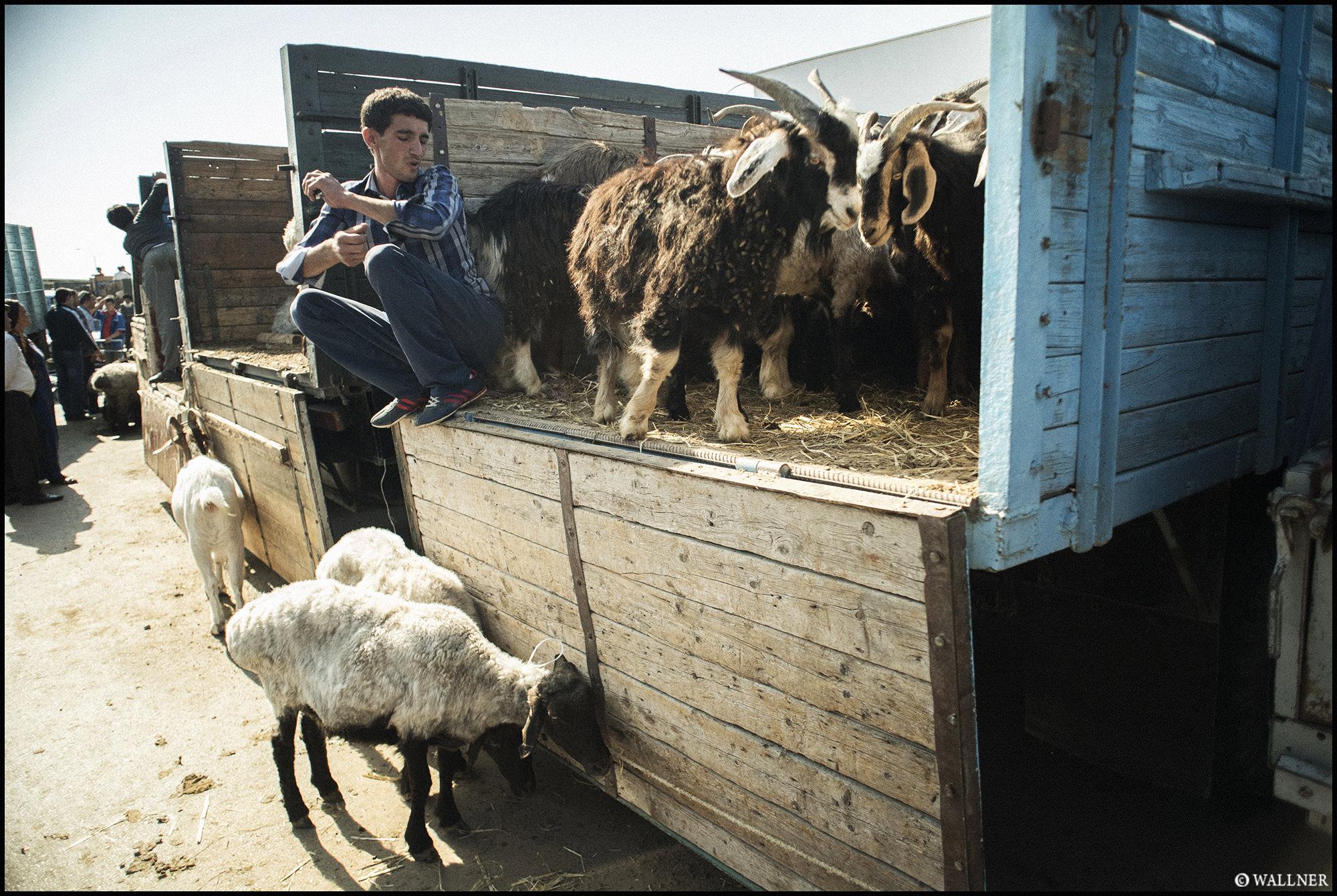 Digital Patrik Wallner Ashgabat Goats For Sale LOWQ 2000P