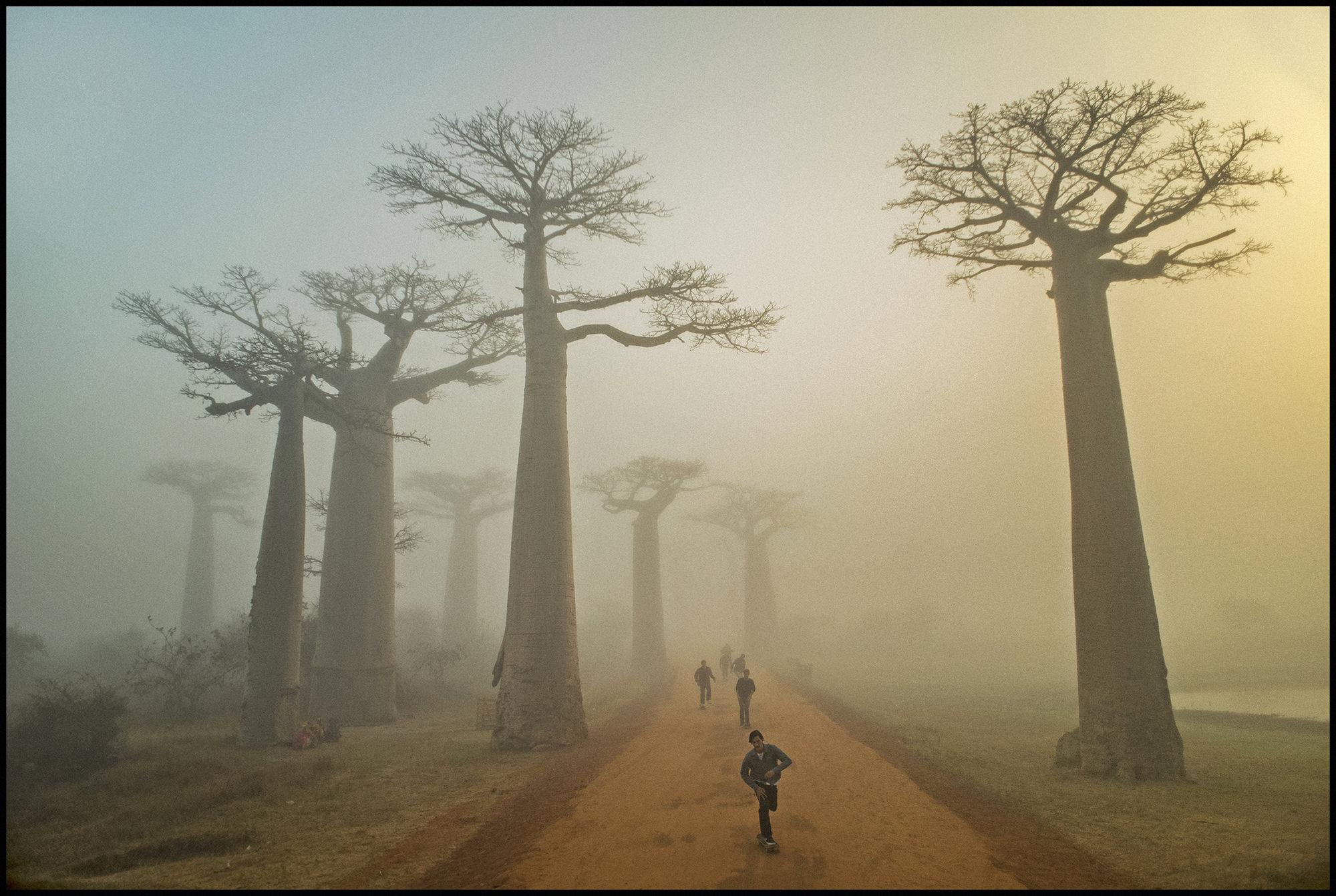 Digital Patrik Wallner Baobabs Push LOWQ 2000P