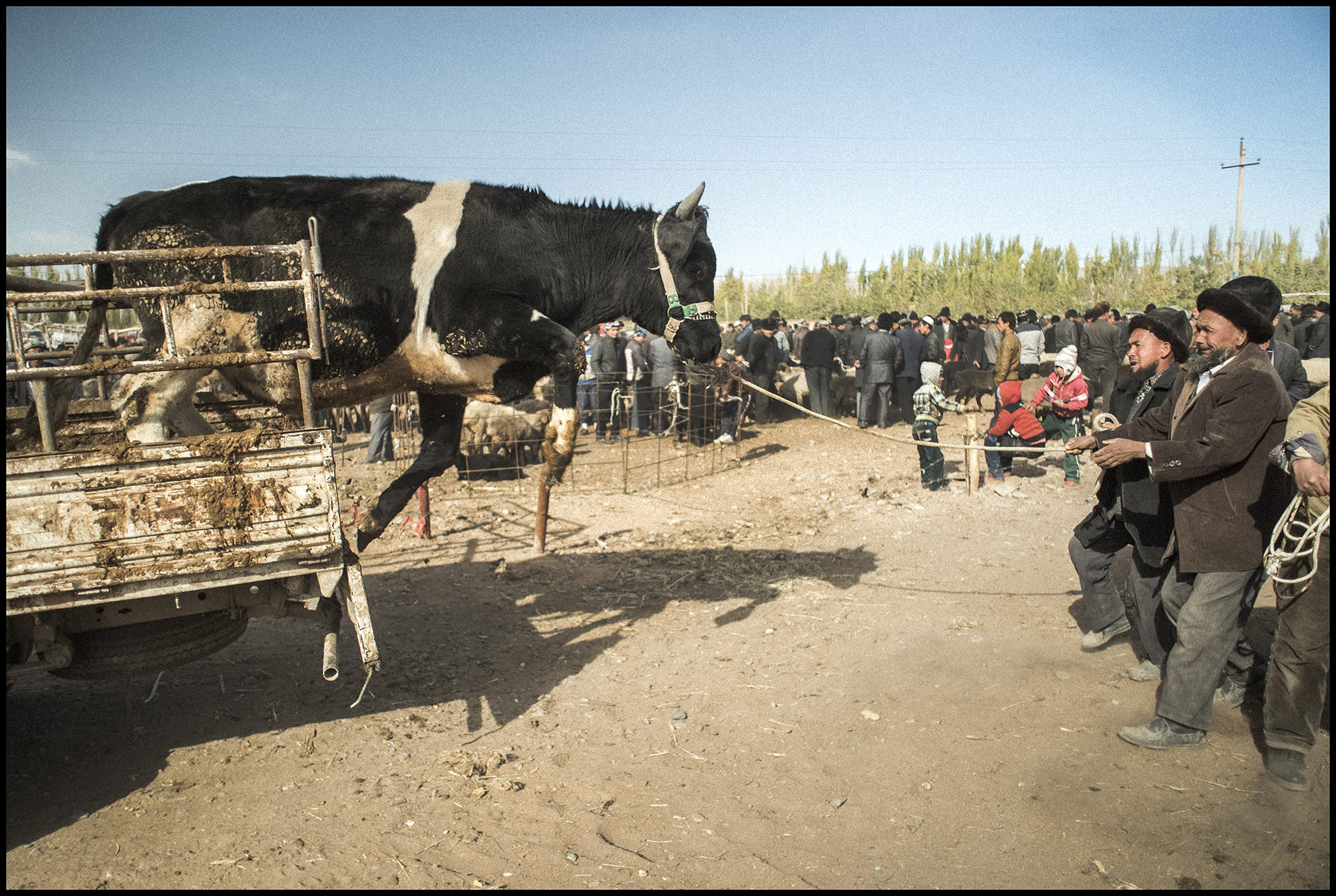 Digital Patrik Wallner Kashgar Cow Jump LOWQ 2000P