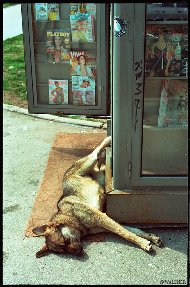 35mmPatrikWallner_Bucharest_StreetDog1LOWQ