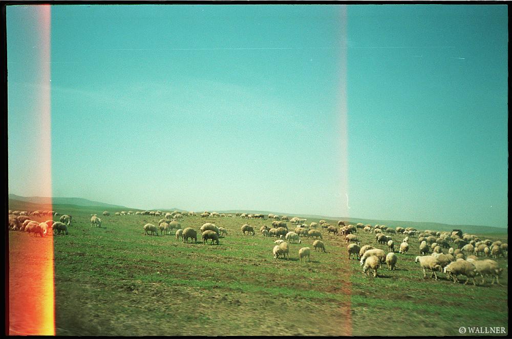 35mmPatrikWallner_Cappadocia_SheepLOWQ
